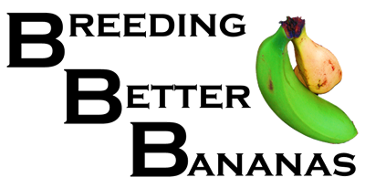 BANANA BREEDING LOGO